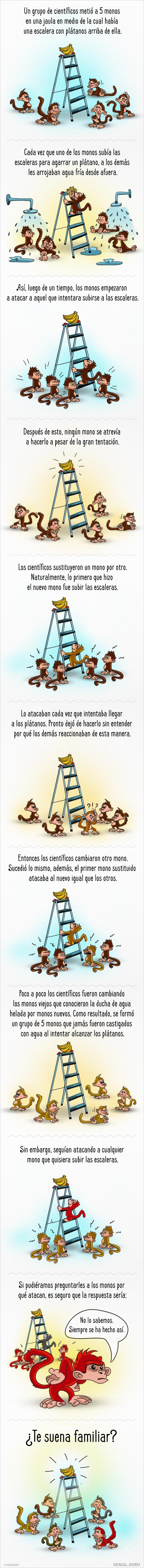 la historia de los monos